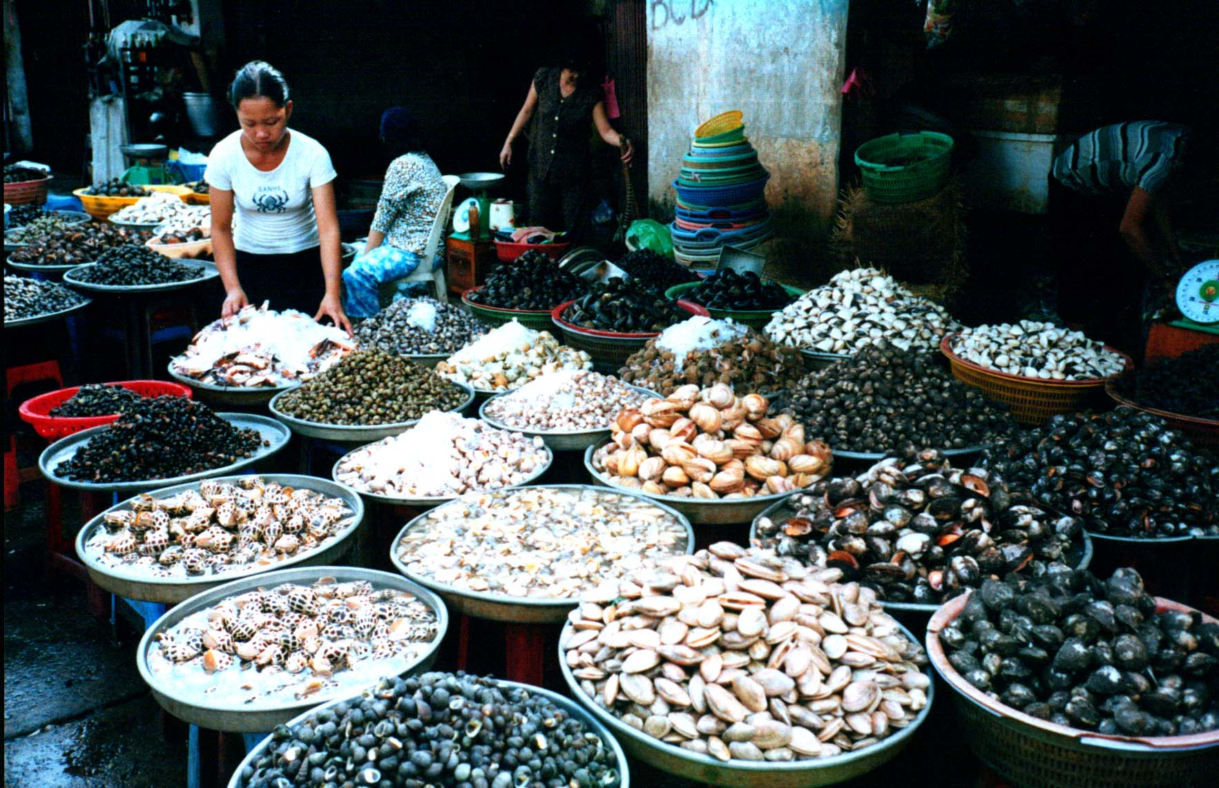 A vendor displays all kinds of shellfish at one of Ho Chi Minh's markets near the Saigon River (Ho Chi Minh, Vietnam) - Page 157