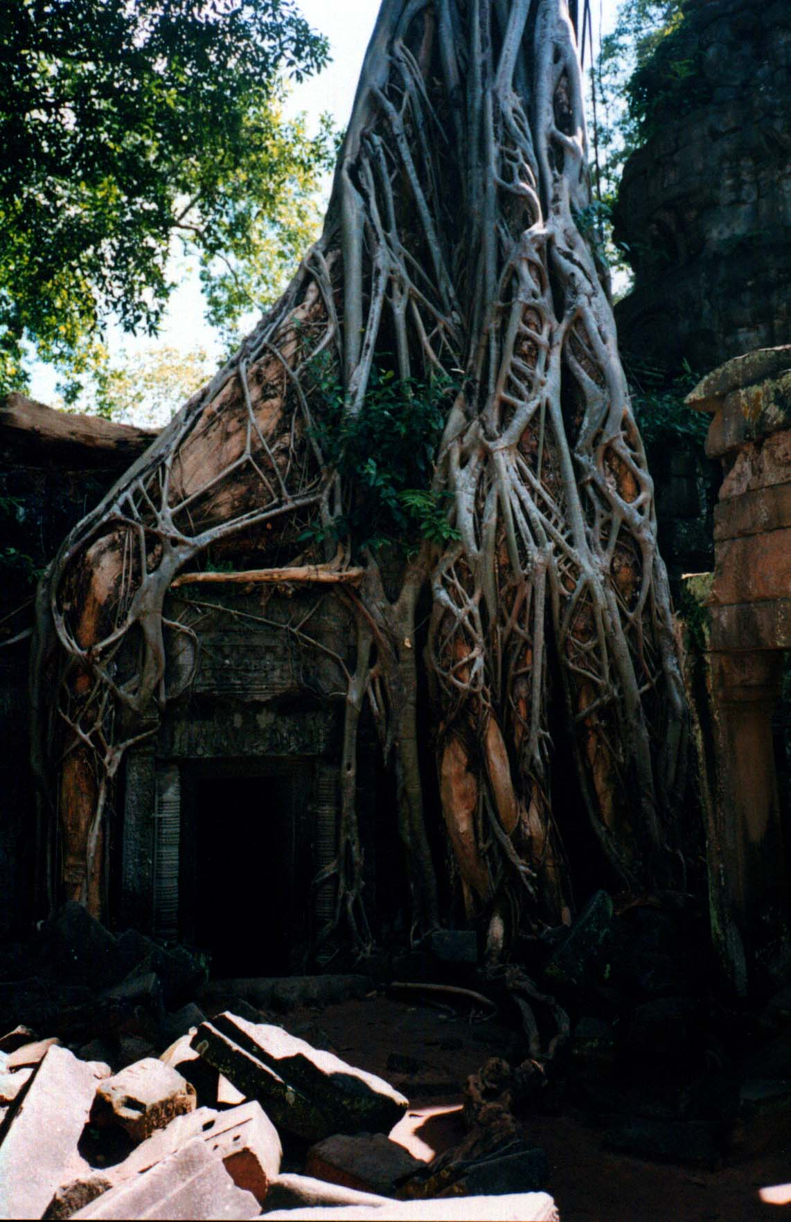 A tangle of tree roots chokes the entrance to a passageway at Ta Promh (Angkor Wat in Siem Riep, Cambodia) - Page 183